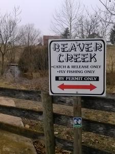 Beaver Creek Flyfishing