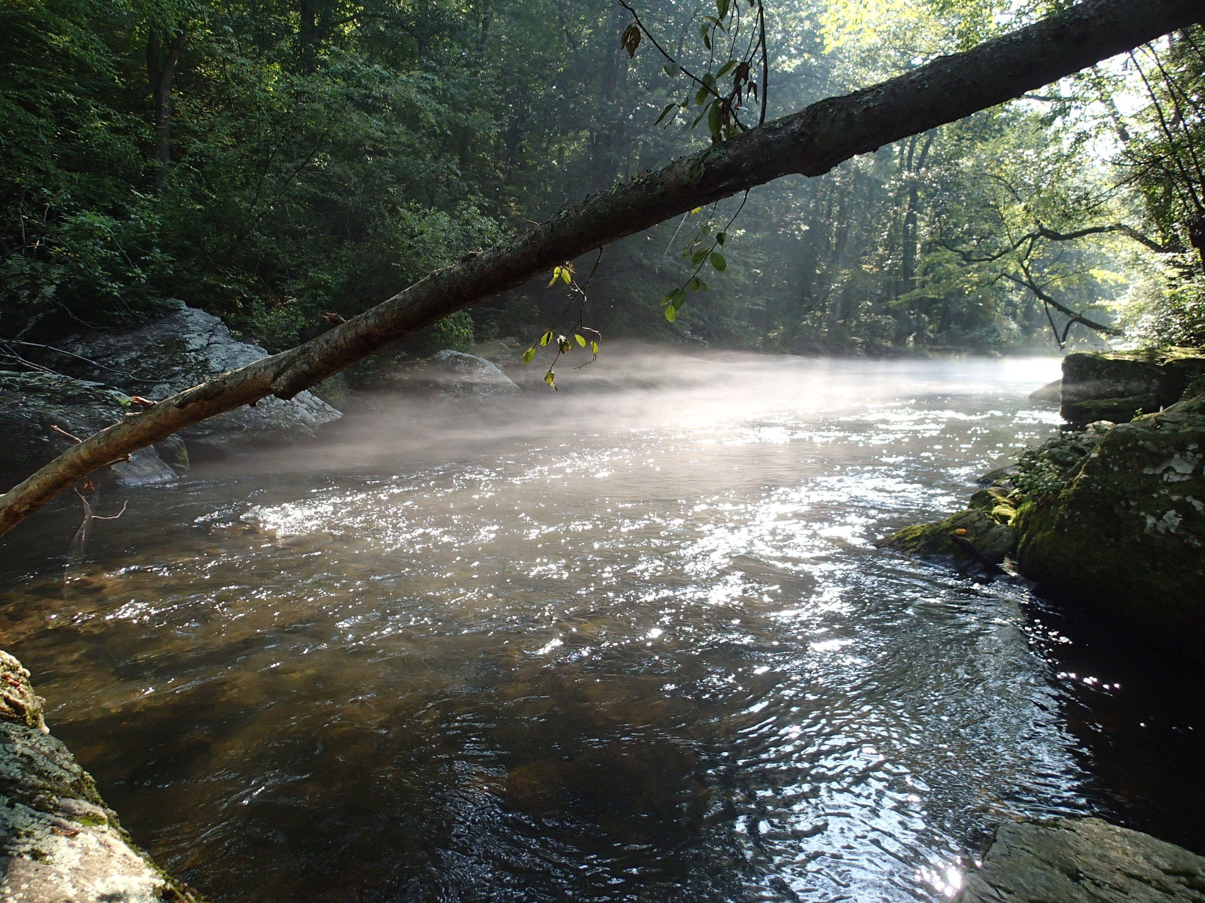 Fly fishing for trout james kibler for Trout fishing maryland