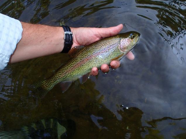 Flyfishing for rainbow trout Gunpowder Falls
