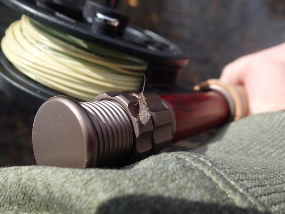 Caddis flyfishing Gunpowder Falls Maryland